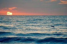 Sunrise, Satellite Beach FL
