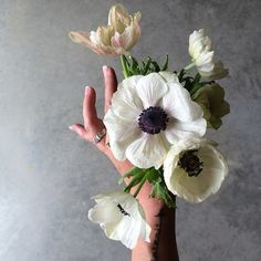 SnapWidget | playing with anemones  #FreshHues #FarmersMarket #BuyLocal #SlowLiving #ModernFolk
