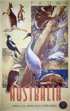 Australia Fauna by Northfield, James (1887-1973)
