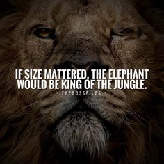 300 Motivational and Inspirational Quotes 121 car quotes inspirational Life Quotes Love, Great Quotes, Me Quotes, Strong Quotes, Positive Quotes, Inspirational Quotes About Success, Success Quotes, Motivational Quotes, Leader Quotes