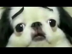 Dog with eyebrows.  Seriously watch this! Your life isn't complete until you do
