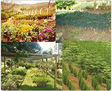 Jardinagem e Paisagismo - Produção de Mudas Ornamentais