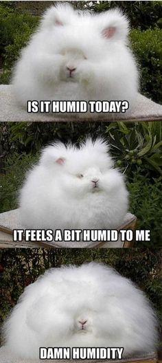LOL! cute... i-love-animals-
