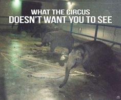 Ringling Brothers & B B Circus... :( do not support animal abuse!