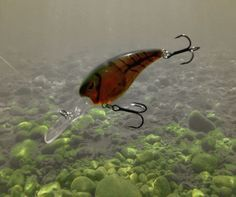Fishing on pinterest bass fishing fishing tips and bait for Wired 2 fish