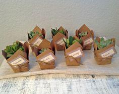 DIY-succulent-favor-minu-succulent-pary-favor-11.jpg 600×475 pixels