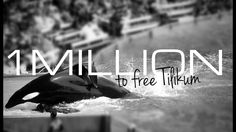 Petition (1 million signatures needed): SeaWorld, Inc.: humanely release the Orca whale known as Tilikum to a seapen for rehab. MANY SIGNATURES STILL NEEDED!