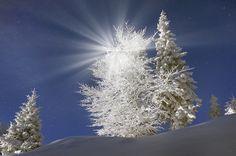 Photo Rays of light Zakarpattia Ukraine Nature Spruce Winter Snow