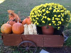 Filled old cart with pumkins, hay bale and beautiful mum for fall decor