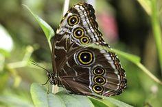 Butterfly by Milan Zygmunt, via 500px