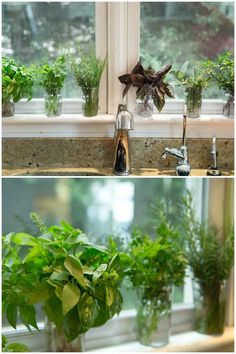 My Favorite Trick for Summer Herbs - This hint will save you lots of steps and make it super easy to always have herbs at your fingertips all summer long.