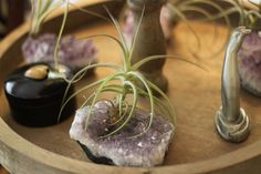 airplants IN amethysts!
