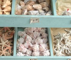 Sea shells shouldn't be sold, but these are really pretty.