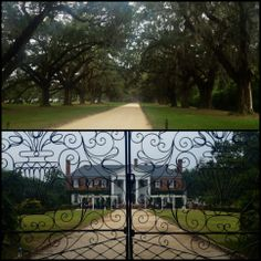 A backdrop of antebellum beauty...the historic and picturesque Boone Hall Plantation - minutes from Wild Dunes Resort - hosts special events in addition to seasonal tours of the home and gardens. See event calendar & plan your visit: http://boonehallplantation.com/events.php