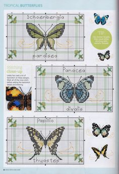 Butterfly cross stitch and chart. SPREAD YOUR WINGS 5