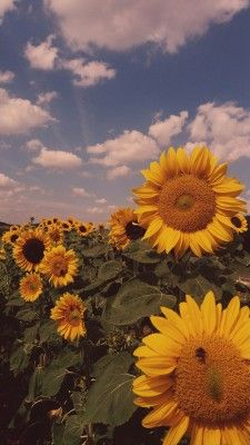 Trendy Ideas For Flowers Fondos Verticales Sunflower Iphone Wallpaper, Pastel Wallpaper, Wallpaper Backgrounds, Aesthetic Backgrounds, Aesthetic Iphone Wallpaper, Aesthetic Wallpapers, Flower Aesthetic, Nature Aesthetic, Fred Instagram