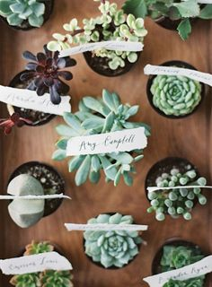 pretty succulent favors http://weddingwonderland.it/2015/07/matrimonio-botanico.html