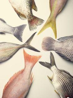 Paleta de pescados frescos