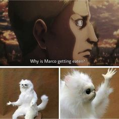 That is a good question Reiner, why IS Marco getting eaten?