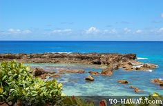 truely one of my favorite places on earth! shark's cove, oahu is amazing!