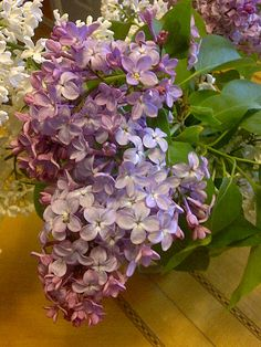 Okay, I am so ready for spring after seeing this picture. They always are in bloom for my birthday!!!  Ahhh lilac!