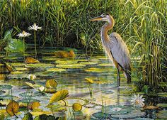 Great Blue Heron by Greg Biolchini
