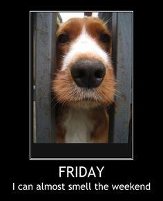 Friday Seasons Months, Tgif, Dog Stuff, Good Morning, Thursday, Humor, Motivation, Night, Easy