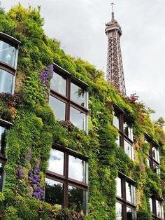Vertical gardening, Paris