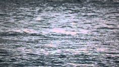 Video-captured on 7th September 2014 from Cape May Point, NJ, while following a school of dolphins in the Delaware Bay with a 500mm lens on a shaky tripod. Towards the end of the clip, listen for the creatures' vocalizing as they pass through (sounds like chirping). The mammals swam past after sunset.