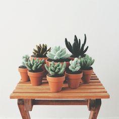Contra Botanic - Handmade felt succulents in Toronto.