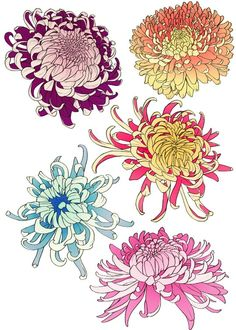 chrysanthemums Japanese Flower Tattoo, Japanese Flowers, Japanese Art, Traditional Japanese, Japanese Chrysanthemum, Chrysanthemum Flower, Chrysanthemum Drawing, Botanical Drawings, Botanical Art