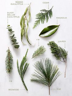 A Glossary to Seasonal Greenery - Lush inspiration to help you deck your halls in a whole new way
