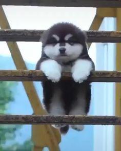 Baby Animals Super Cute, Super Cute Dogs, Cute Little Animals, Cute Funny Animals, Funny Dogs, Cute Cats, Adorable Dogs, Cutest Animals, Baby Animals Pictures