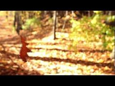Stock Video Footage of A Leaf Dancing in the Autumn Wind, Refusing to Fall. Download the clip and others for free at my blog: beachfrontprod.blogspot.com for royalty free use.