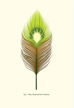 New Zealand Kiwi Feather Wall Art from The little GALLERY of fine ARTS