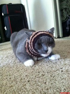 Muslim Cat - http://cutecatshq.com/cats/muslim-cat/