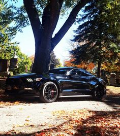 2016 Mustang GT Premium fastback, Coyote Powered 302