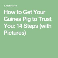 How to Get Your Guinea Pig to Trust You: 14 Steps (with Pictures)