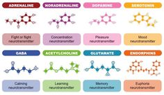 acetylcholine serotonin and dopamine neurotransmitters combined Cortisol, Mental Health Nursing, Public Health, Molecule Tattoo, Adhd Brain, Chemical Structure, Fight Or Flight, Neurotransmitters, Psychology