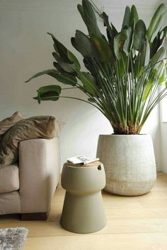 17 Astounding Beige Living Room Plants To Decorate Your Beautiful Living Room – Modern Beige Living Rooms, Beautiful Living Rooms, Large Indoor Plants, Potted Plants, Large Plant Pots, Green Plants, Tropical Plants, Big Plants, Planet Decor