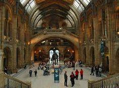 Resultado de imagem para natural history museum