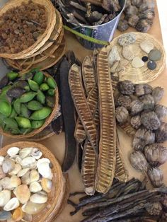 Items collected from nature walks - loose materials for art, creation and play - Nurture Nature ≈≈ http://www.pinterest.com/kinderooacademy/loose-parts/