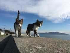 Photos of Sanagishima(cat) Island (Kagawa Japan)