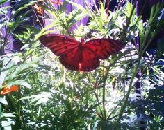 Butterfly...my Mom loved all things butterfly, she would have loved this pic...RIP Mom