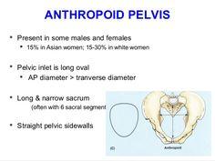applied-anatomy-of-pelvis-and-fetal-skull-39-638.jpg (638×479)