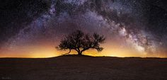 """Tree of Wisdom"" photo by Aaron J. Groen. A Panoramic view of our Milky Way Galaxy over an Ancient Native American burial mound."