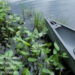 Inspirational Wallpaper Creative Success Peaceful Canoe July 2012 480x320