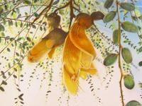 Tracey Vickers / Artists / Home - Artists.co.nz Art School, Online Art, New Art, Posters, Artists, Gallery, Creative, Plants, School Of Arts