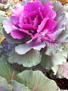 JOJO POST WEEDS:  WITER AND GROWING KALE, EASY.