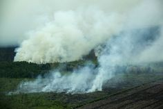 palm tripa burning
